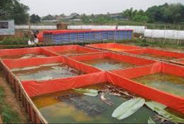 Suhu Efisien Pada Harga Terpal Untuk Kolam Ikan Lele