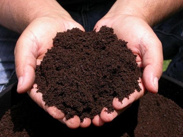 Cara Membuat Pupuk Kompos dari Sampah Rumah Tangga