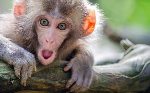 Monkeypox,